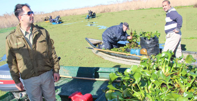پاکسازی تالاب انزلی از گیاه مهاجم سنبل آبی