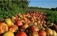 بازار محصولات کشاورزی، نابهره وری مصرف آب