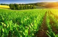 توسعه کشاورزی فراسرزمینی ضرورت اصلی در مدیریت آب