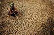مشکل مالی و خشکسالی کشاورزان هندی را بسوی خودکشی می برند
