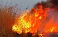 آتش در بخش ایرانی هورالعظیم نیز شعله ور شد