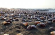 اکوسیستم دریای خزر با انتقال آب نابود می شود