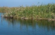 ۸۷ درصد از تالاب هورالعظیم آبگیری شد