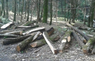 مرگ تدریجی جنگلها در سایه ارائه برنامههای ناکارآمد
