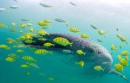 کاهش 17 درصدی حیات دریایی با تداوم گرم شدن زمین