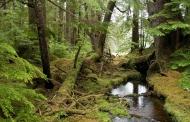 حال وخیم جنگل های هیرکانی با وجود ثبت جهانی آن