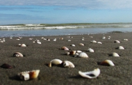 خلیج گرگان در مسیر نابودی