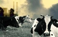 برای مقابله با گرمایش زمین باید مصرف گوشت را کاهش داد