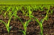 محصولات کشاورزی به تنش شوری و خشکی مقاوم شدند