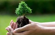 استانداردهای همکاری سمنها با سازمان محیطزیست تدوین میشود