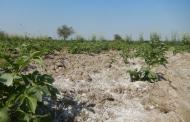 تغییرات آب و هوایی چگونه میتواند جذب خاک را تغییر دهد؟