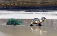 تجهیزات ماهیگیری، منشا اصلی آلودگیهای پلاستیکی اقیانوسها