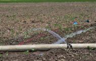 بهره وری آب در کشاورزی ایران یک پنجم جهان است