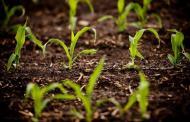گیاهان با دستکاری ژنتیک آب کمتری مصرف می کنند