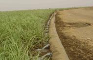 دولت برای کشاورزی برنامهریزی نمیکند