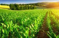 خدمات کشاورزی در اختیار کشتهای آببر قرار نگیرد