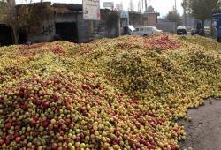 بیبرنامگی کشاورزی در حوضه آبریز دریاچه ارومیه