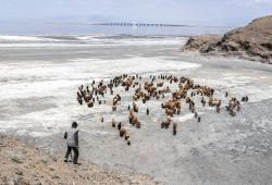 پیامدهای خشکشدن دریاچه ارومیه- عکس از سولماز دریانی