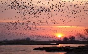 گیلان میزبان مسافران سیبری؛ آغاز مهاجرت پرندگان به تالاب های گیلان