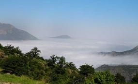 جنگل رودبارک شهمیرزاد؛ جنگلی بر فراز ابرها