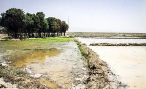 رسیدگی به معضل آبیاری مزارع با فاضلاب شهری در دستور کار جهاد کشاورزی قرار گرفت