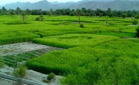 خودکفایی تولید محصولهای کشاورزی آب بر اشتباه است