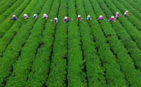 کاهش 80 درصدی مصرف آب در مزارع هند