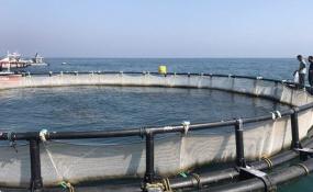 تولید هزار تن ماهی در دریاچه سد کارون 4