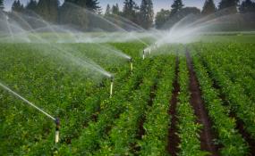 کارشناسان جوان ایرانی برنده جایزه بینالمللی صرفهجویی آب کشاورزی شدند