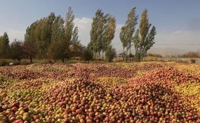 آموزش روشهای بهینه تولید به کشاورزان حاشیه دریاچه ارومیه