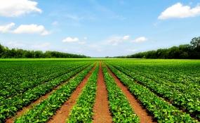 صرفهجویی ۲۹ میلیارد مترمکعب آب کشاورزی در ۱۰ سال
