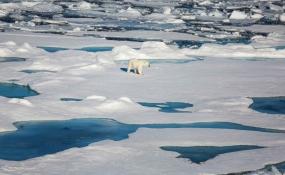 خطرِ دیگر تغییرات جوی برای پستانداران دریایی