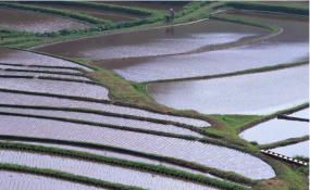 امسال محدودیت کشت آبی در کشور اعمال می شود