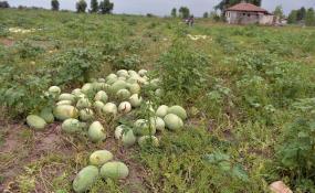 الگوی نادرست مصرف آب در بخش کشاورزی « تمامیت کشور» را نشانه گرفته است