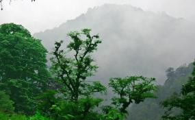 جنگل های هیرکانی؛ ۴۰ میلیون سال قدمت و زیبایی