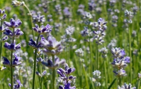 مدیریت مصرف آب و گیاهان کم آبخواه