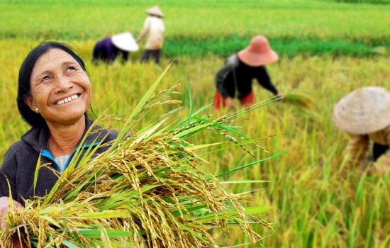بیمه درآمد کشاورزان؛ پیشنیاز دستیابی به انگیزه اصلاح الگوی کشت