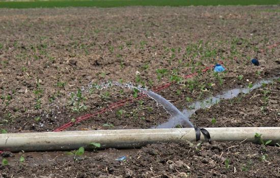 راهکار دولت روحانی  برای تنظیم مصرف آب کشاورزی