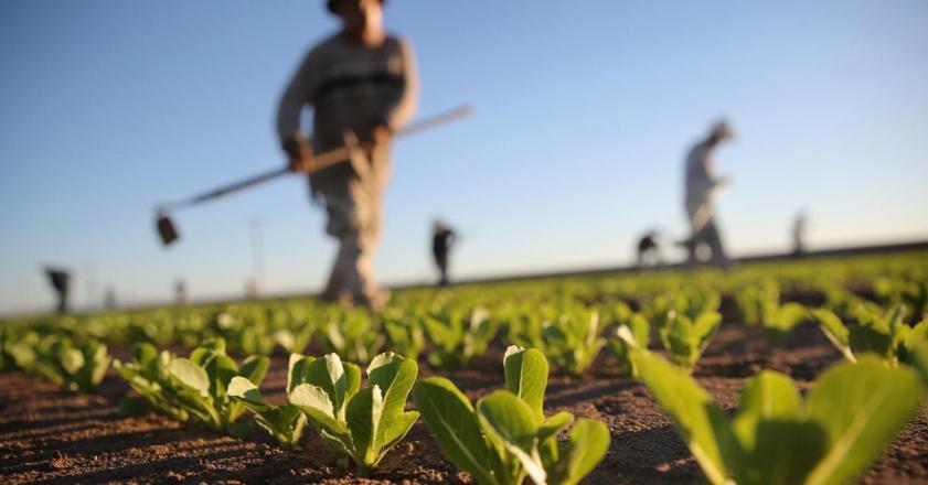 سرانه اراضی کشاورزی کشور رو به کاهش است